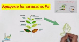 Aquaponie les carences en fer