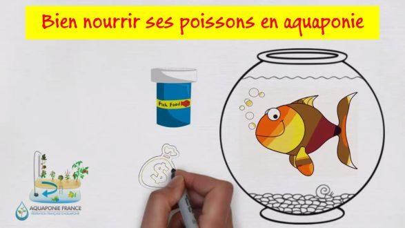 Bien nourrir ses poissons en aquaponie
