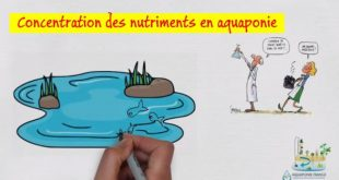 Concentration des nutriments en aquaponie