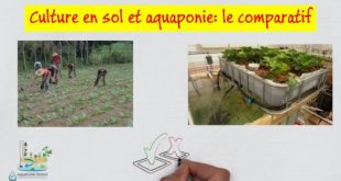 Culture en sol et aquaponie - le comparatif