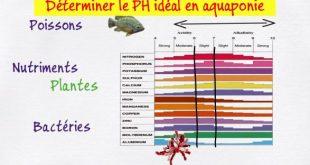 Déterminer le PH idéal en aquaponie