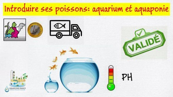 Introduire ses poissons en aquaponie et aquariophilie