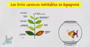 Les trois carences inévitables en aquaponie