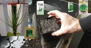 Réussir ses semis de ciboulette