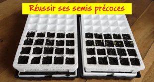 Réussir ses semis précoces