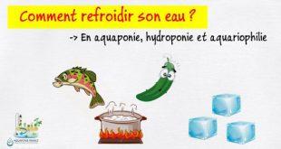 Refroidir son eau en aquaponie, hydroponie et aquariophilie