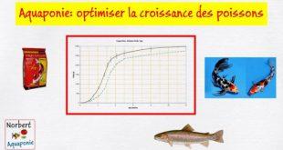 Aquaponie optimiser la croissance des poissons