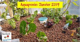 Norbert aquaponie Janvier 2019