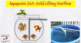 Aquaponie SLO - Solid Lifting Overflow