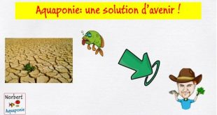 Aquaponie- Une solution d'avenir