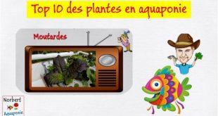 Top 10 des plantes pour l'aquaponie