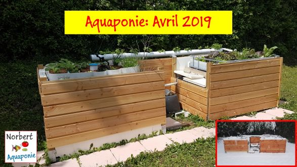 Norbert Aquaponie Avril 2019