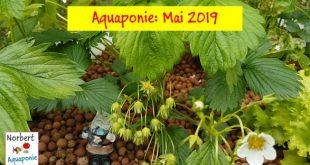 Norbert Aquaponie Mai 2019