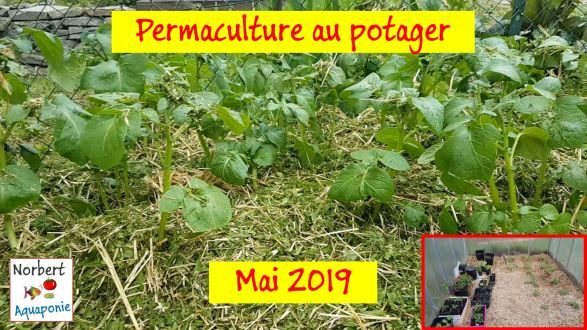 Permaculture mai 2019 Norbert Aquaponie