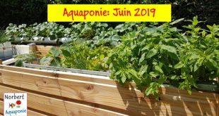 Aquaponie - Juin 2019