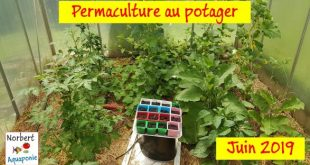 Permaculture Juin 2019