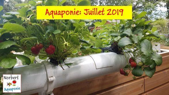 Norbert Aquaponie Juillet 2019