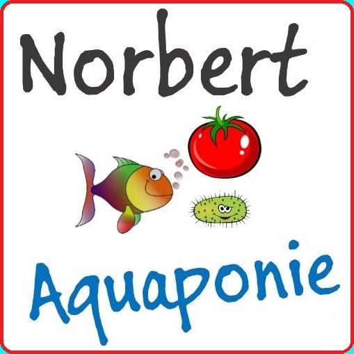 Logo carré norbert aquaponie square final