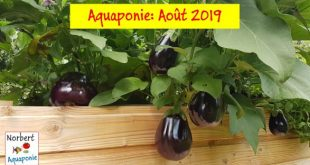 Norbert Aquaponie Août 2019