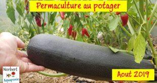 Norbert Aquaponie Permaculture Août 2019