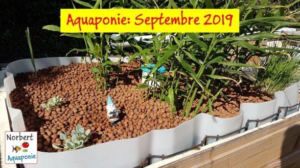 Norbert Aquaponie Septembre 2019