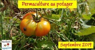 Permaculture au potager - Septembre 2019