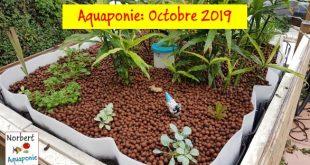 Norbert aquaponie Octobre 2019