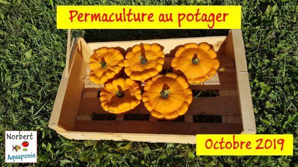 Permaculture au potager - Octobre 2019