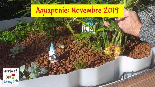 Norbert aquaponie Novembre 2019