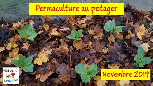 Permaculture au potager - Novembre 2019