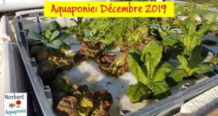 Norbert Aquaponie Décembre 2019