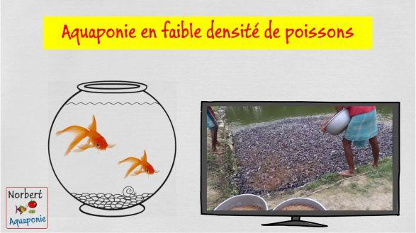 Aquaponie en faible densité de poissons