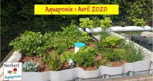 Aquaponie - Avril 2020