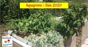 Norbert Aquaponie Juin 2020