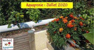 Norbert Aquaponie Juillet 2020