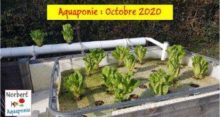 Norbert Aquaponie Octobre 2020