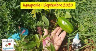 Norbert Aquaponie Septembre 2020